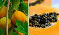 11 Proven Papaya Benefits