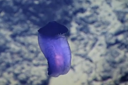 What's This Purple Thing That Scientists Just Spotted in Deep Ocean (Video)