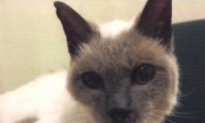 Meet The World's Oldest Cat (Video)