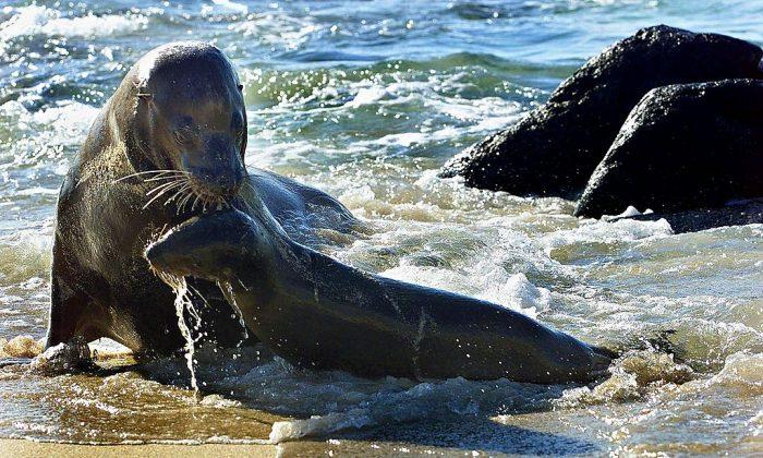 A sea lion stock photo (Martin BernettiAFP/Getty Images)