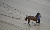Two Horses Die on Preakness Stakes Day—How Common Are Deaths in Horse Racing?