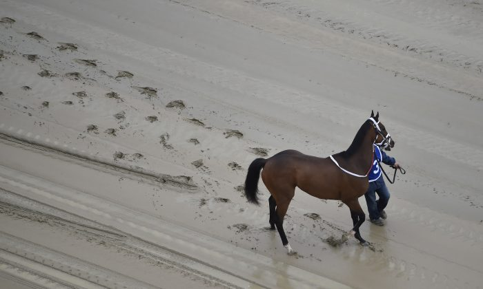 A hot walker moves down a muddy track with Homeboykris before the first horse race ahead of the 141st Preakness Stakes at Pimlico Race Course, Saturday, May 21, 2016, in Baltimore. The horse died shortly after the race, possibly of cardiovascular collapse. (AP Photo/Mike Stewart)
