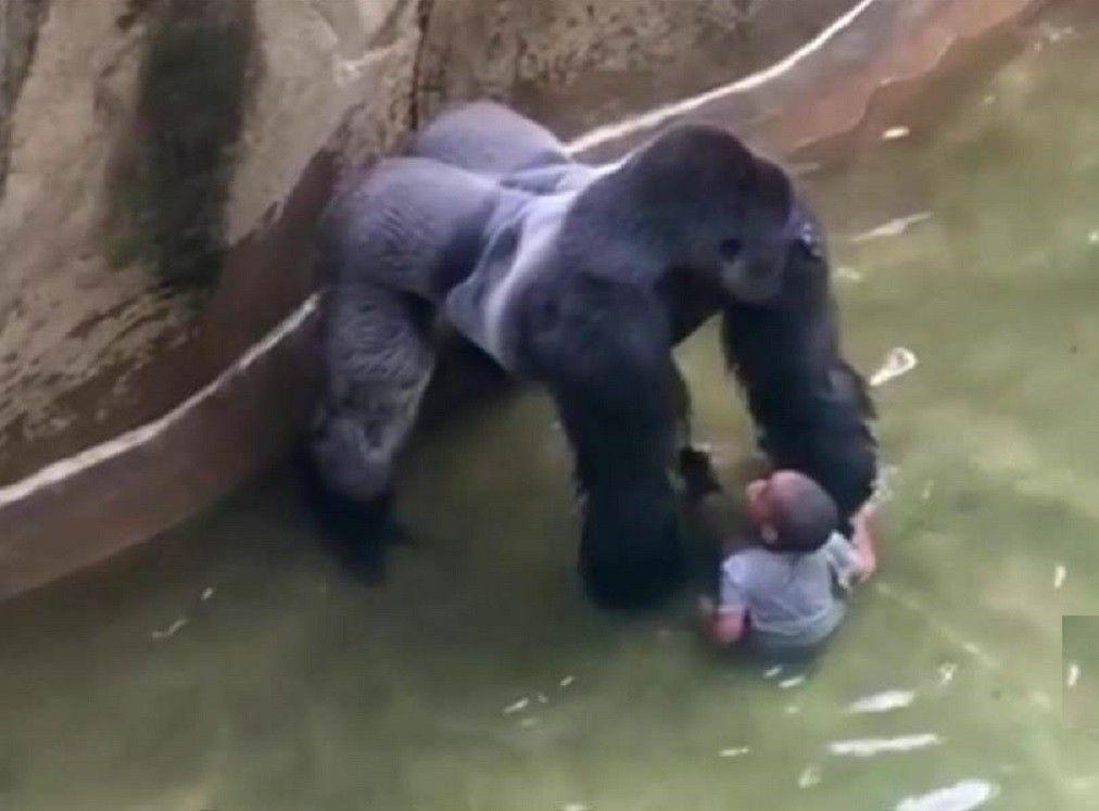 after gorilla death animal expert jeff corwin says zoos aren t
