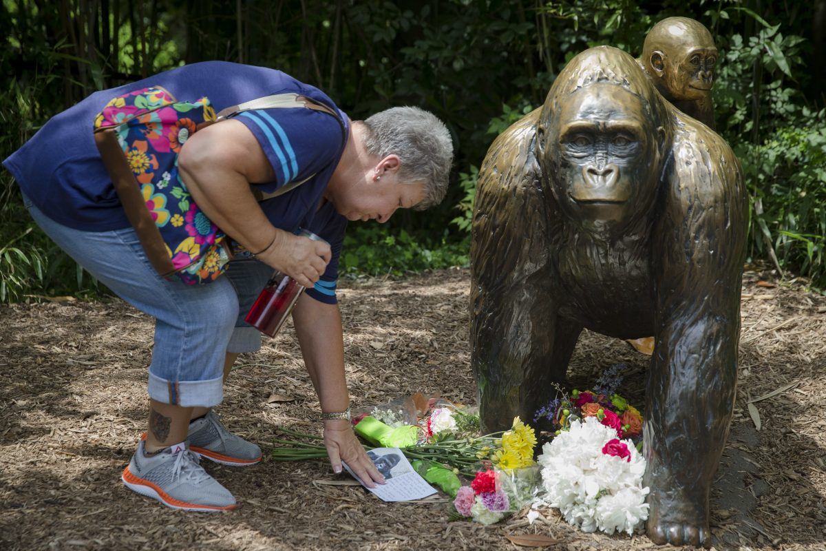 Https Celebrities React To Killing Of Gorilla In Circuit Board Hedgehog Glass Sculpture By Flyingcheesetoastie 3000 Ap 16150653875691 1 1200x800