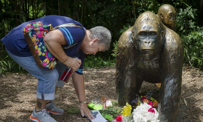 Eula Ray, of Hamilton, whose son is a curator for the zoo, touches a sympathy card beside a gorilla statue outside the Gorilla World exhibit at the Cincinnati Zoo & Botanical Garden, Sunday, May 29, 2016, in Cincinnati. On Saturday, a special zoo response team shot and killed Harambe, a 17-year-old gorilla, that grabbed and dragged a 4-year-old boy who fell into the gorilla exhibit moat. (AP Photo/John Minchillo)
