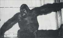 There Was Once a Gorilla Named 'Gargantua' Called 'World's Most Terrifying Living Creature'