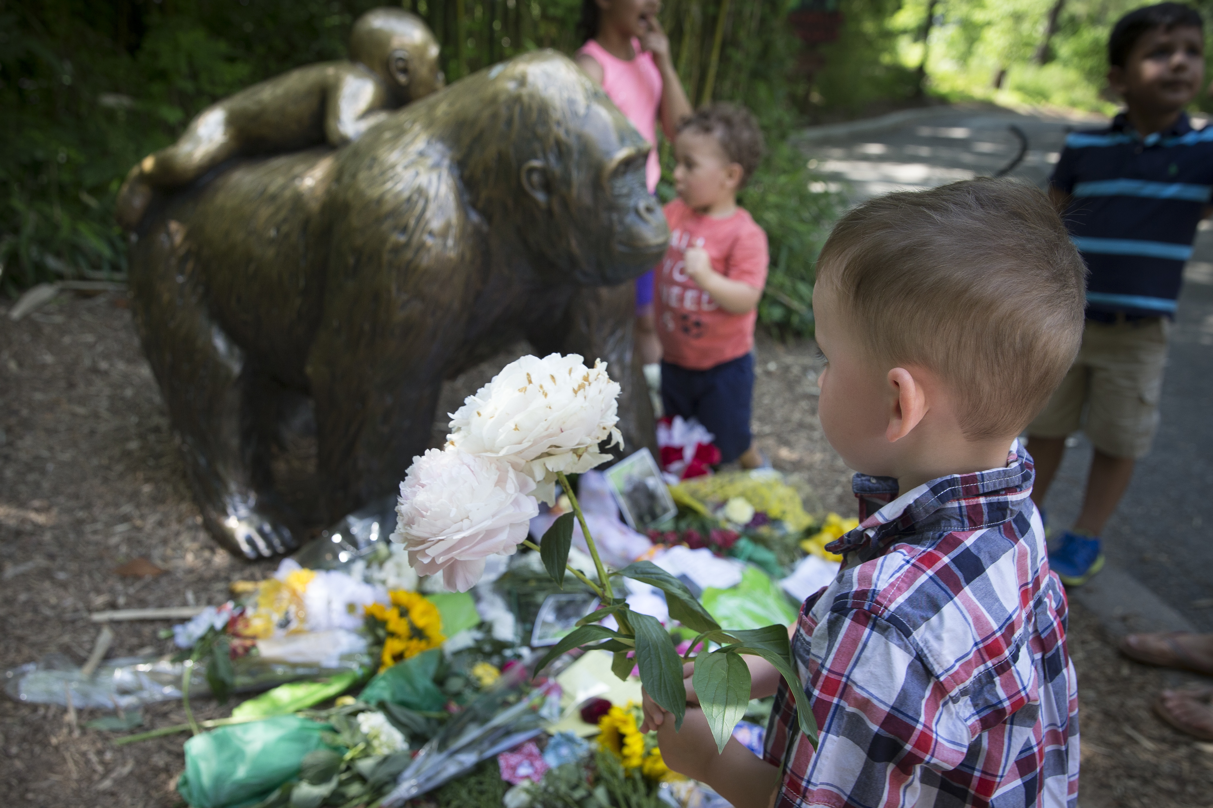 Zookeeper Writes Lengthy Piece on Gorilla and the Little Boy