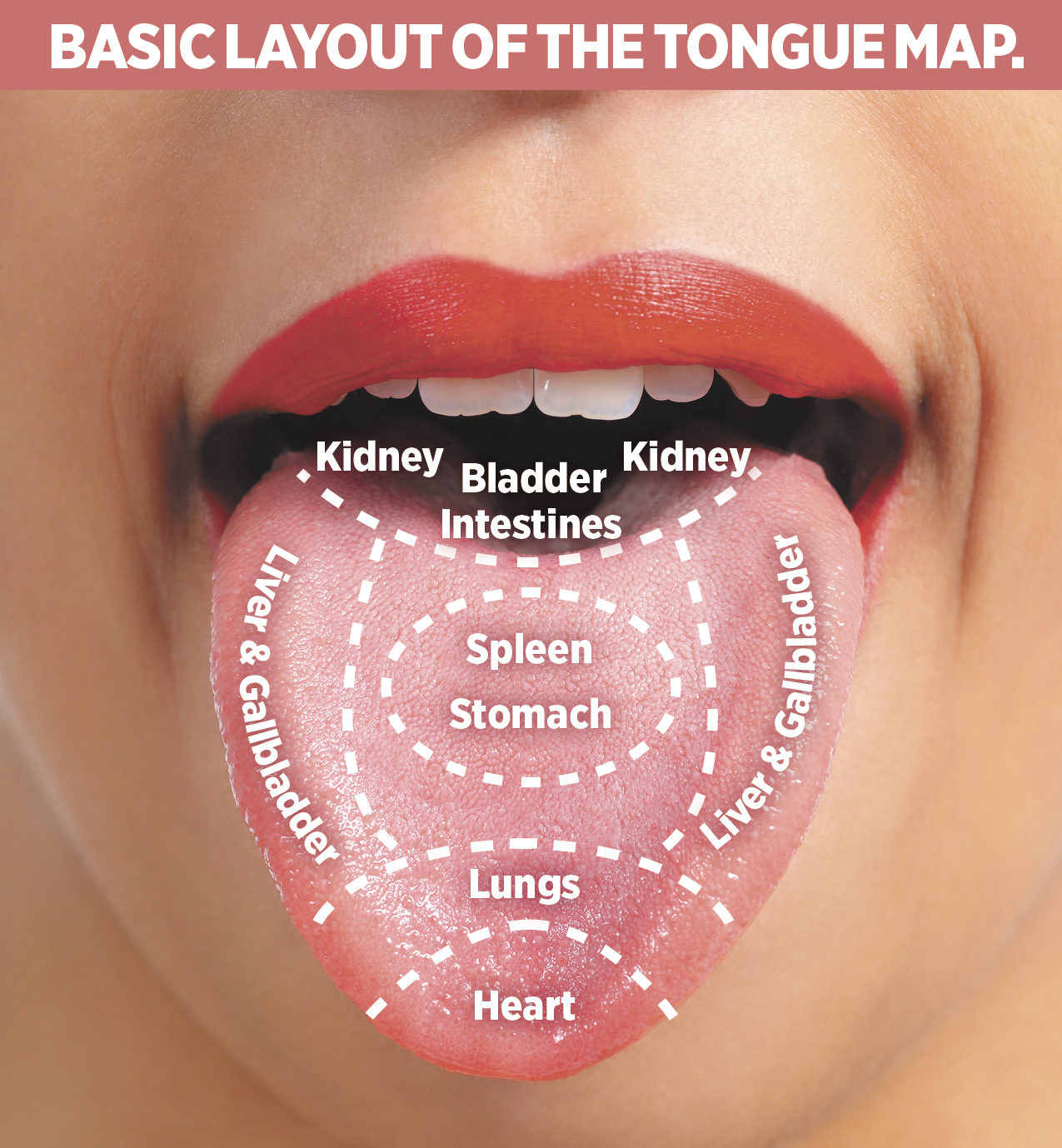 The Tongue Is A Map Of The Body In Chinese Medicine Diagnosis