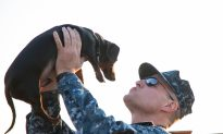 Nonprofit Cares for Military Pets When Their Owners Deploy—for Free