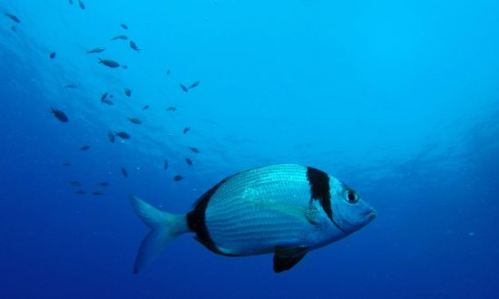 'Smart' Tropical Fish Can Recognise Human Faces