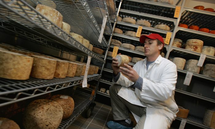 Brian Ogden checks a Tourmalet pressed sheep's milk cheese from the French Pyrenees mountains while he works at New York's Artisanal Cheese Center on Oct. 13, 2006.  (AP/Richard Drew)