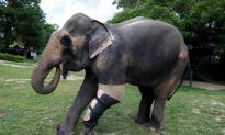 Robert Herjavec of 'Shark Tank' Offers to Replace 4-Year-Old's Stolen Prosthetic Leg