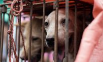 Kidnapping, Poisoning of Captured Pets and Strays Leads to Tainted Dog and Cat Meat in Chinese Markets