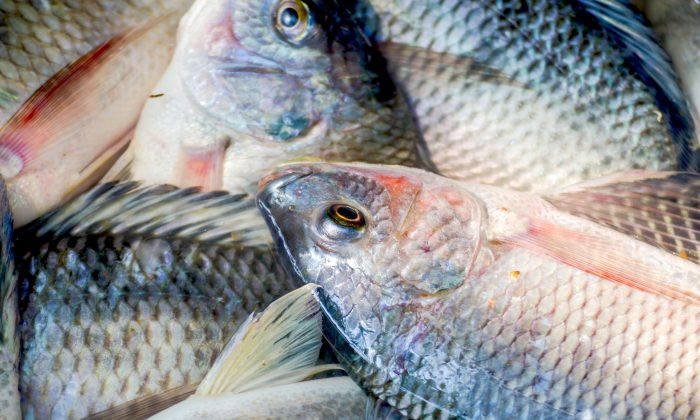 This Is Why You Should Never Eat Tilapia