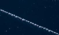 Sighting Of Rarely Seen 'Colonial Organism' In Deep Ocean Stuns Explorers (Video)