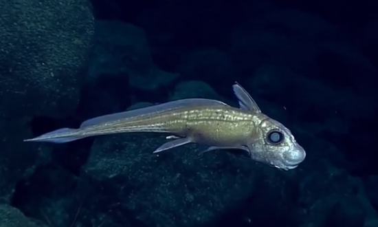 10 Deep Sea Creatures That Look Like They Came From Outer Space (Video)
