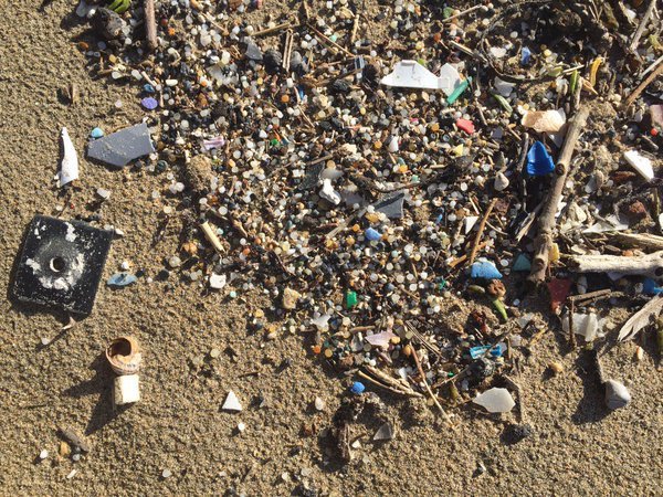 Plastic debris on a beach. (Courtesy of Charles Rolsky)