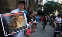 Activists Call for End to South Korean Dog Meat Festival