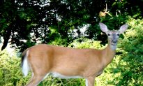 Experts: Deadly 'Zombie' Deer Disease Could Possibly Spread to Humans