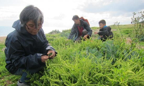 Sea Beet Leaves and Elderflower: Learning to Forage for Food