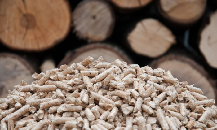 Wood pellets burned to produce electricity in biomass plants. (Tchara/Shutterstock)
