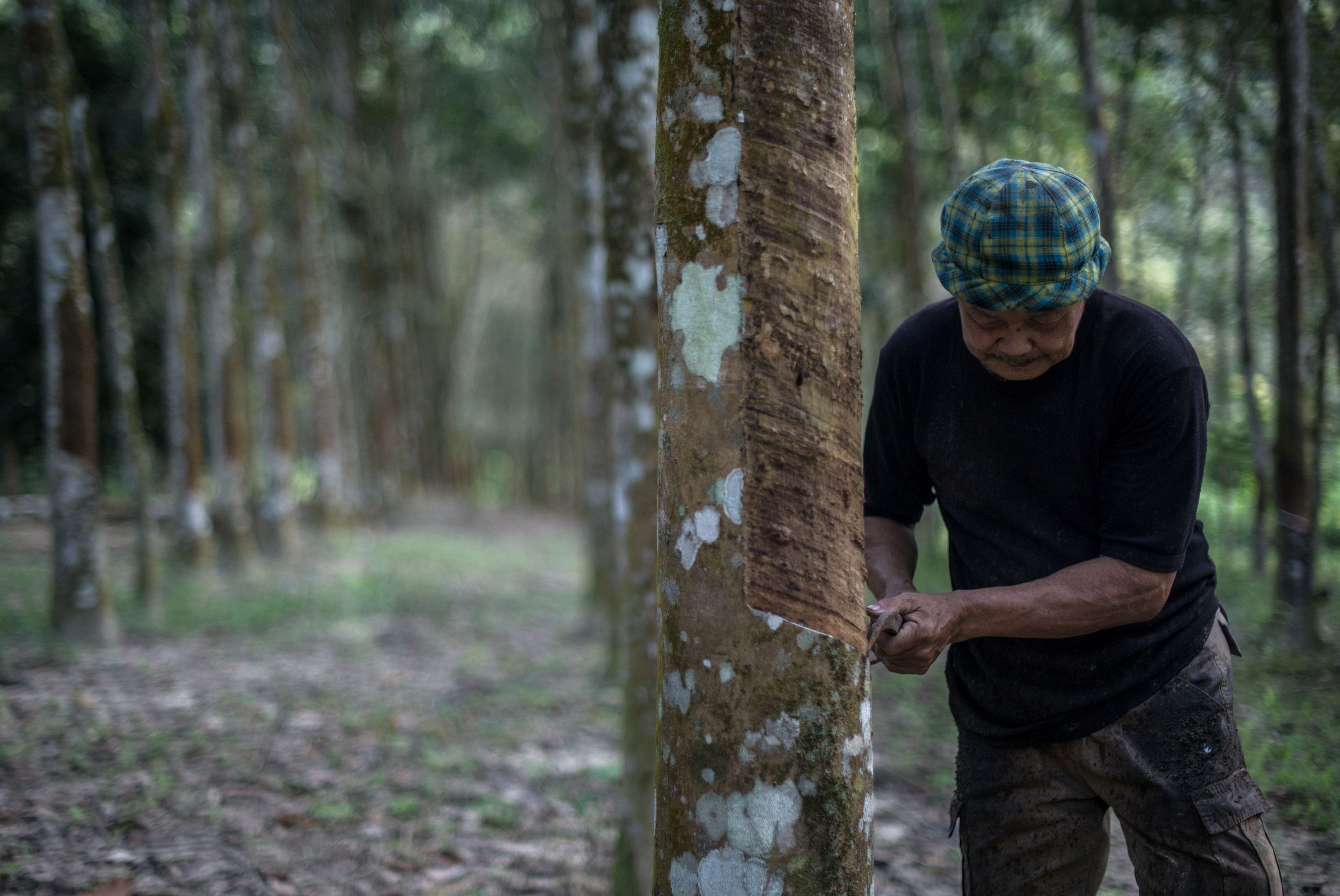 A worker collects raw latex from a rubber tree at a plantation in Pahang, outside Kuala Lumpur, Malaysia, on Jan. 12, 2016. (Mohd Rasfan/AFP/Getty Images)