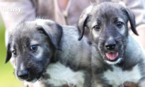 First Documented Identical Twin Puppies Born in South Africa (Video)