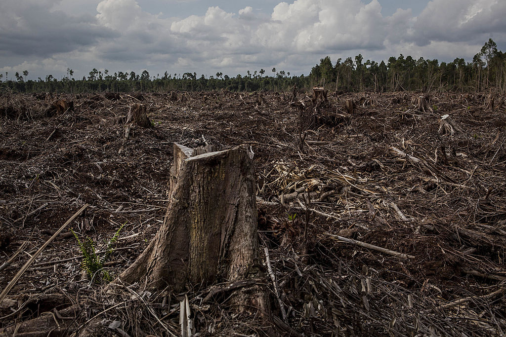 Cattle Industry Lags Behind in Addressing Impact on Deforestation