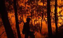 Portuguese Truck Driver Survives Fire, Loses Livelihood