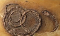 48-Million-Year-Old Fossil Shows Insect Inside Lizard Inside Snake (Video)