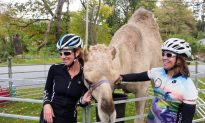 Bikers Ride with the Camels