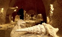 Under the Champagne Vineyards, Ancient Shells Offer Rare Look at the Past