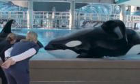 California Bans Orca Breeding and Performance (Video)