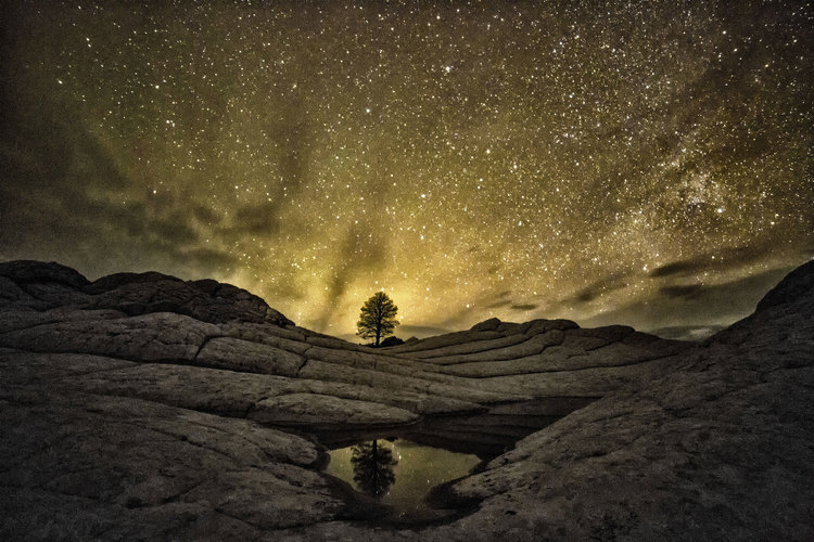 Artificial Light Filling Night Skies Hurts Wildlife and Human Health, Wastes Energy
