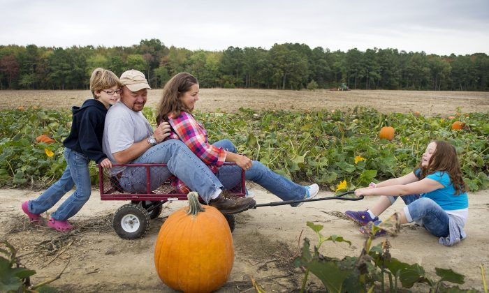 A family has fun at a pumpkin patch in Maryland  (JIM WATSON/AFP/Getty Images)