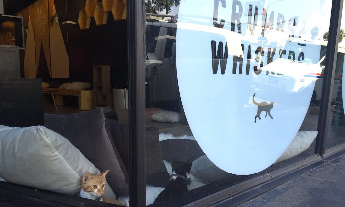 The first cat cafe in Los Angeles, Crumbs and Whiskers, in the Melrose District, on Sept. 22. (Sarah Le/Epoch Times)