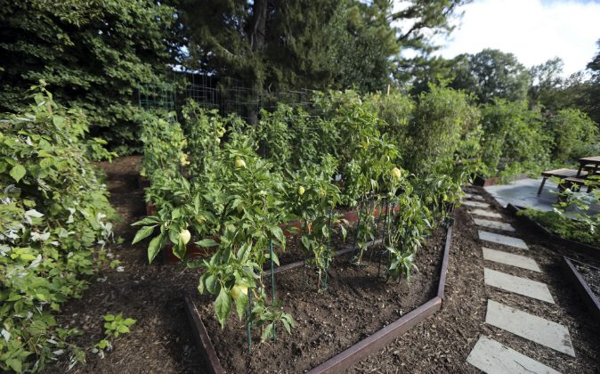 A walkway lined with pavers and layered with mulch is featured in one of the new improvement to the White House Kitchen Garden at the White House in Washington, Wednesday, Oct. 5, 2016. Michelle Obama is going all-out to ensure the White House kitchen garden that she created in 2009 doesn't get plowed under by the next first family. A month out from Election Day, the first lady's office unveiled an expanded and improved garden, with the hope that it will endure regardless of who takes office come January. (AP Photo/Manuel Balce Ceneta)