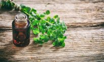 Why You Need Oil of Oregano for Cold and Flu Season