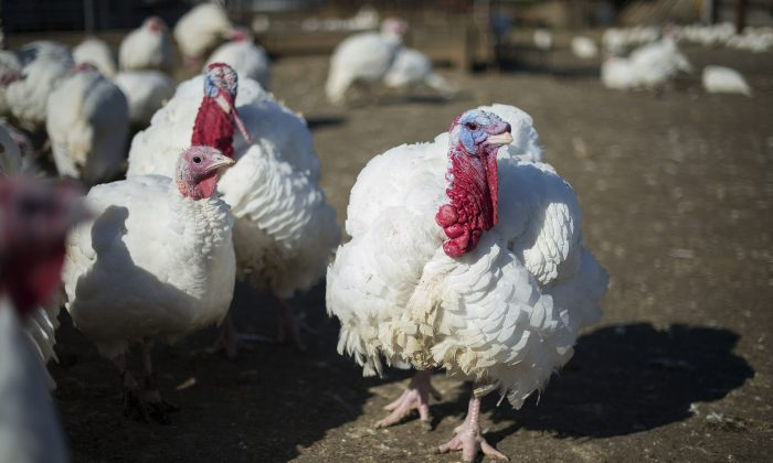 Salmonella outbreak in 26 states, including Hawaii, tied to raw turkey
