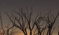 California Trees Dying at 'Unprecedented' Rate (Video)