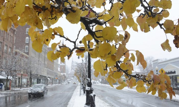 Snow blankets the median on Main Street while a tree maintain its autumn leaves during a storm  in North Adams, Mass., on Nov. 20, 2016. (Gillian Jones/The Berkshire Eagle via AP)