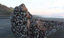 Mysterious Object Washes Ashore in New Zealand (Video)