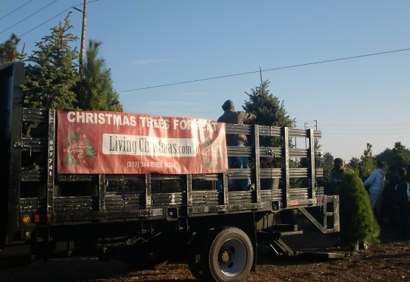 A file photo of workers at the Living Christmas Tree company loading live trees for delivery to people's homes. (Courtesy of the Living Christmas Tree Company)