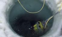 Antarctic Explorers Find Thriving Sea Creature Community Under the Frozen Landscape (Video)