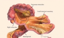 Scientists Discover New Human Organ (Video)