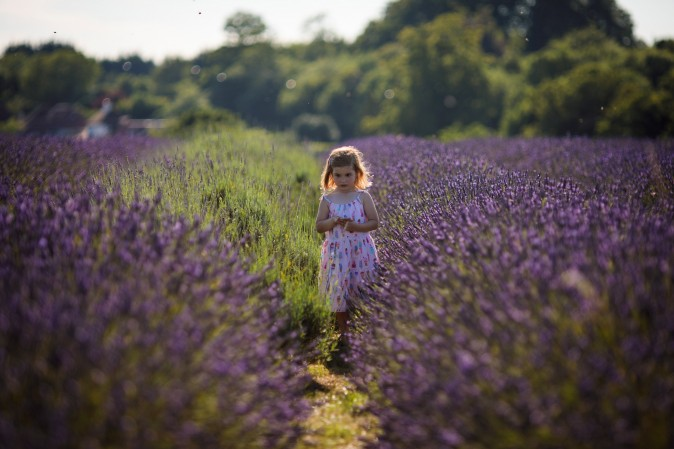 Ariadna, age 4, stands in a field of lavender at Mayfield Lavender Farm on July 5, 2017 in Banstead, England. Lavender has long been used in the cosmetics industry for its scent and can also be used to treat minor burns, insect stings and as a moth repellent in wardrobes. (Photo by Jack Taylor/Getty Images)