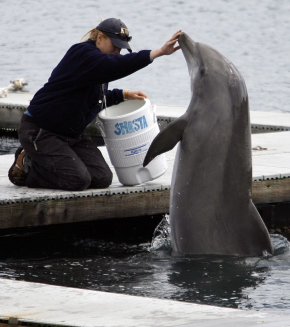 "A trainer (L) touches the nose of U.S. Navy dolphin ""Shasta"" during a demonstration at the U.S. Navy Marine Mammal Program facility at Naval Base Point Loma in San Diego on April 12, 2007. (AP Photo/Denis Poroy)"