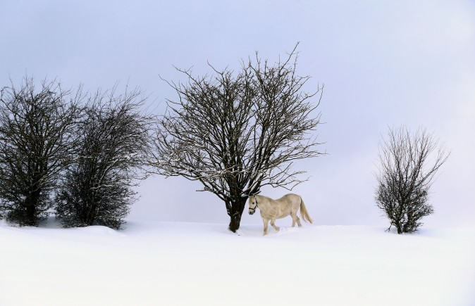 A horse walks through deep snow on its paddock near Ruderatshofen, Germany, on Jan. 15, 2017. (Karl-Josef Hildenbrand/AFP/Getty Images)