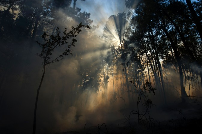 Light beams through the trees after a fire in Arbo, northwestern Spain, on Aug. 11, 2016. (MIGUEL RIOPA/AFP/Getty Images)