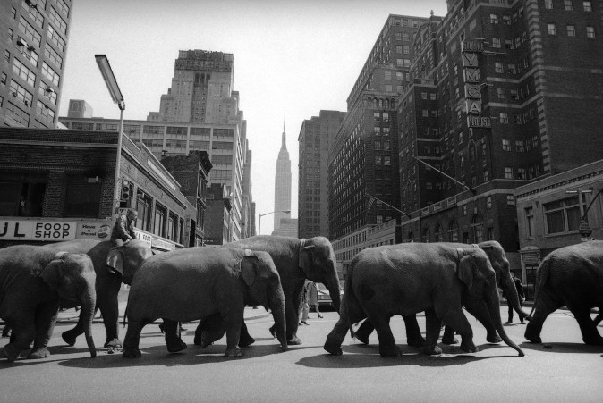 Elephants parade toward Madison Square Garden in New York on April 2, 1968, where the Ringling Bros. and Barnum & Bailey circus opened the same night. The circus is closing as the high operating costs and the decline of ticket sales made it impossible to sustain the business. (AP Photo/John Lindsay)